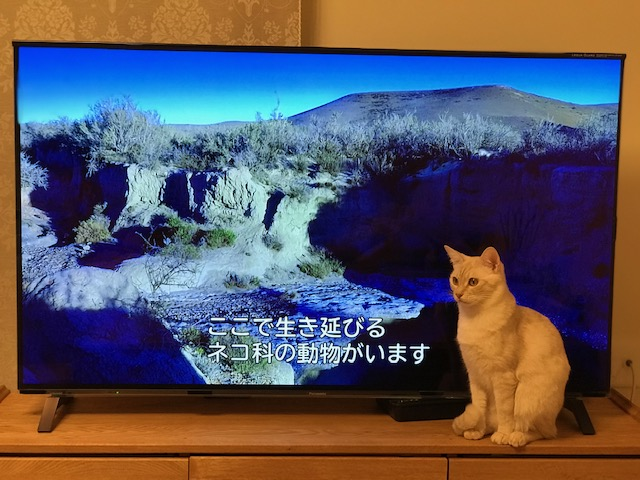 f:id:mahaashi:20210119000508j:plain