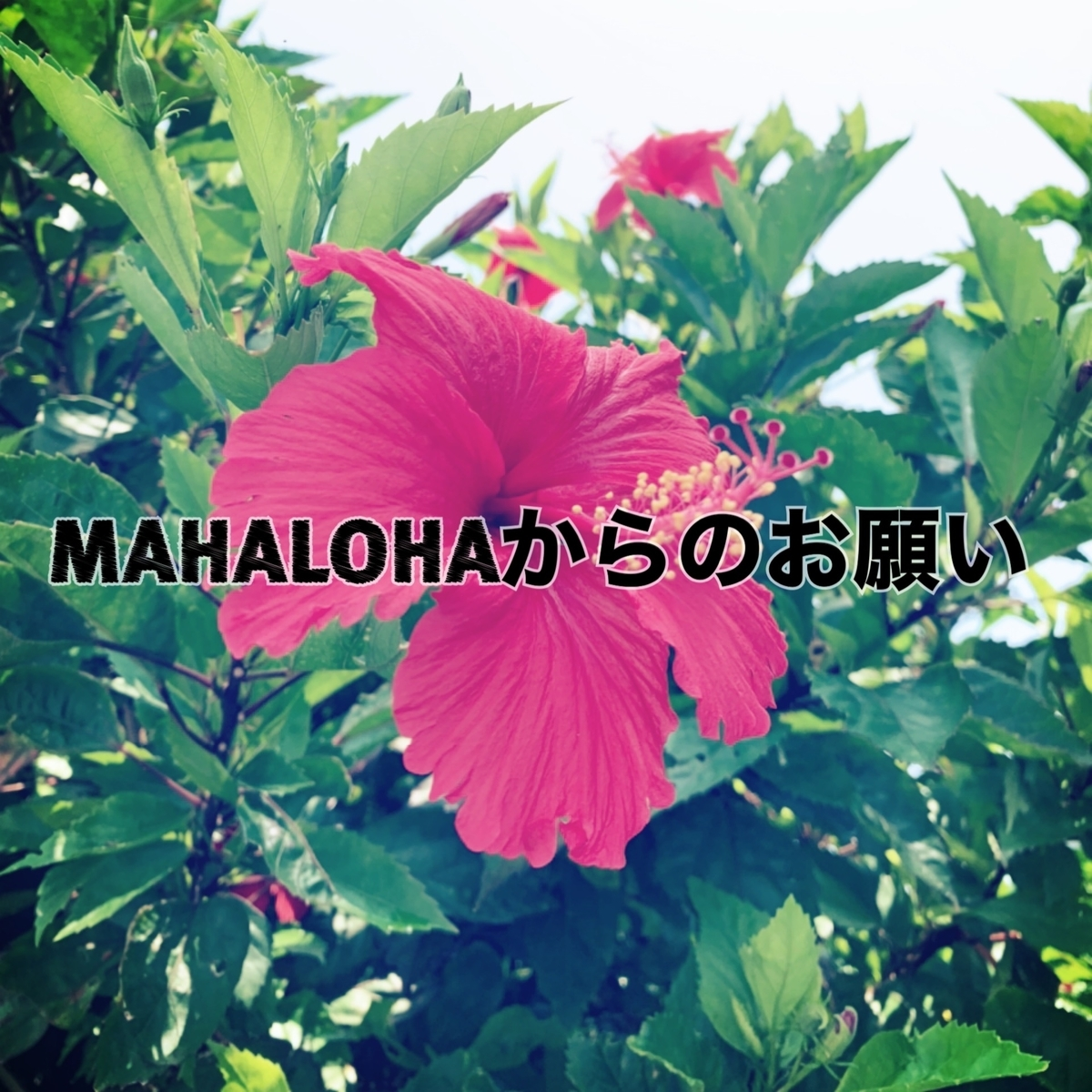 f:id:mahalohaokinawa:20200808154256j:plain