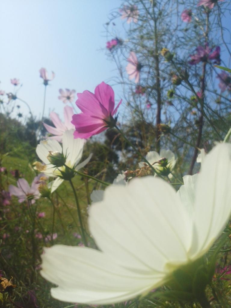 f:id:mahasamadhi:20161113134930j:plain