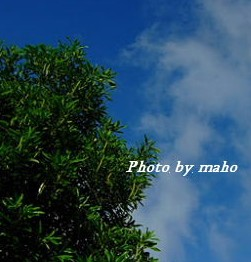 f:id:mahomaho818:20170708000003j:plain