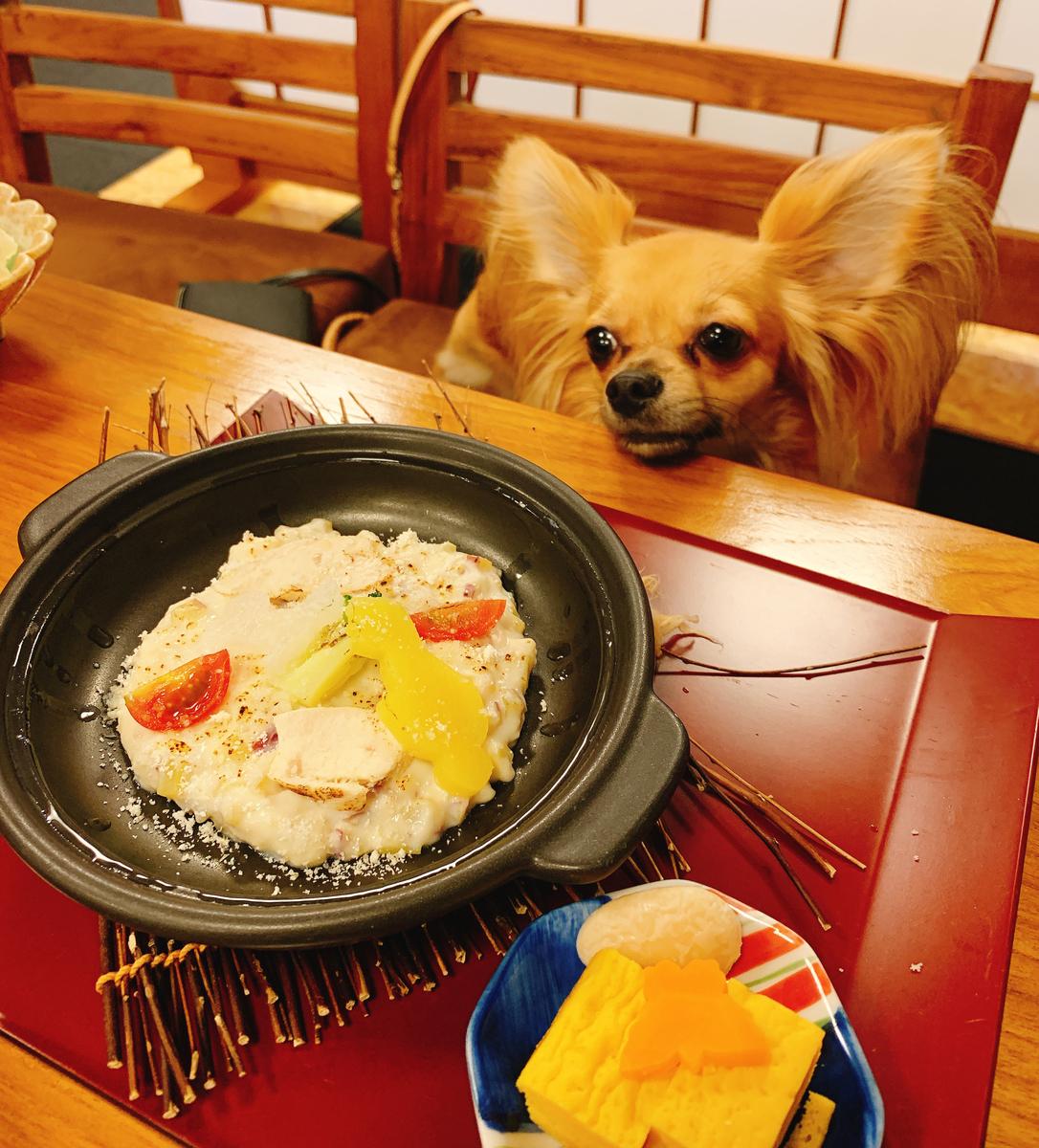 犬 ご飯画像