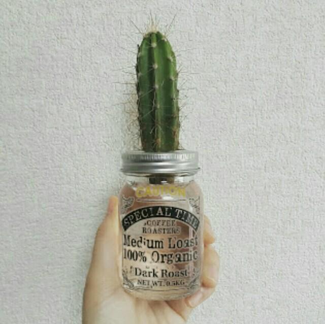 100均瓶とサボテンで作る水栽培