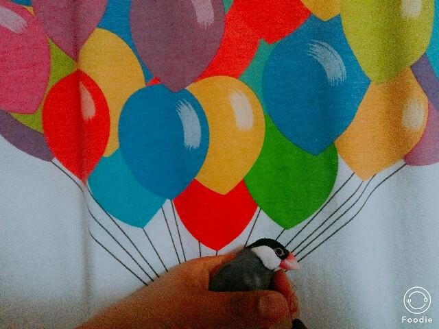 f:id:mai-balloon:20180207230408j:image