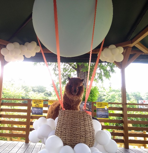 f:id:mai-balloon:20190625200719j:image