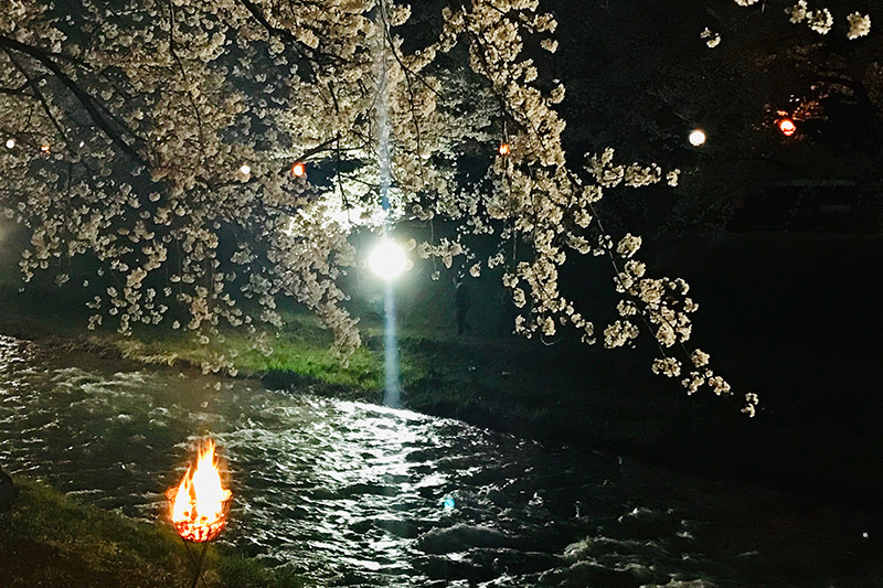 f:id:mai-mokoshi:20190414225859j:plain