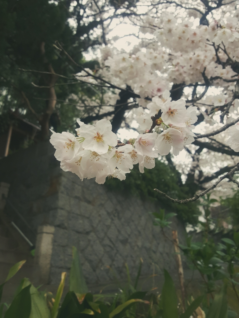 f:id:mai-nishigaki-0114:20170413135507j:plain