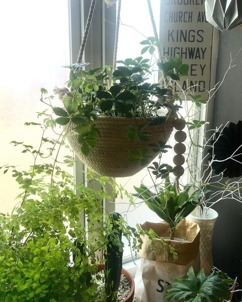 グリーンのある暮らし 観葉植物 フェイクグリーン ニトリ