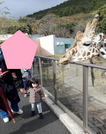 f:id:maikookima:20171231000819j:plain