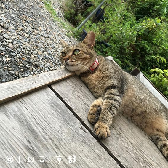f:id:maikoto:20180507175659j:plain