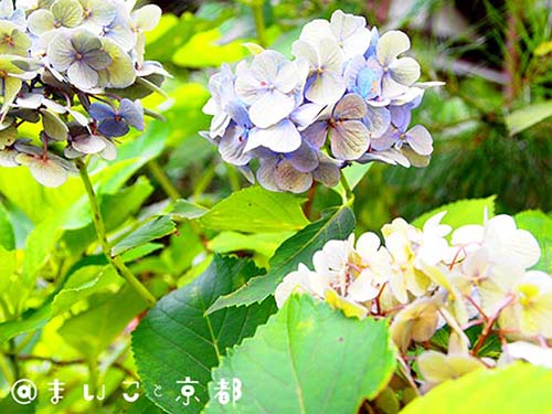 f:id:maikoto:20180813020609j:plain