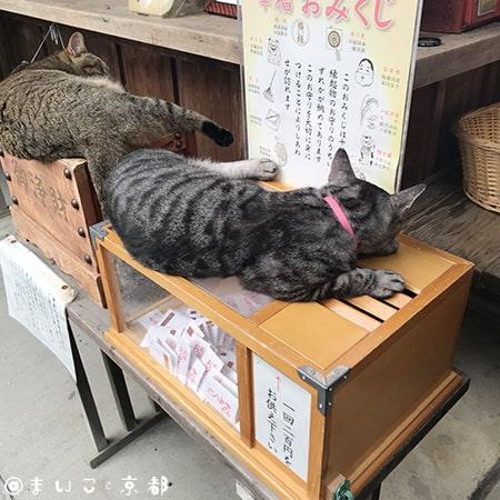 f:id:maikoto:20181206150257j:plain