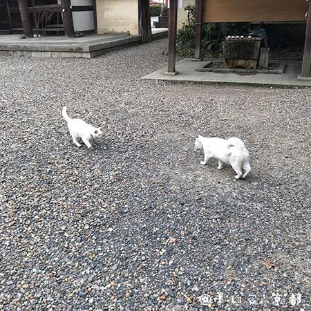 f:id:maikoto:20181206152132j:plain