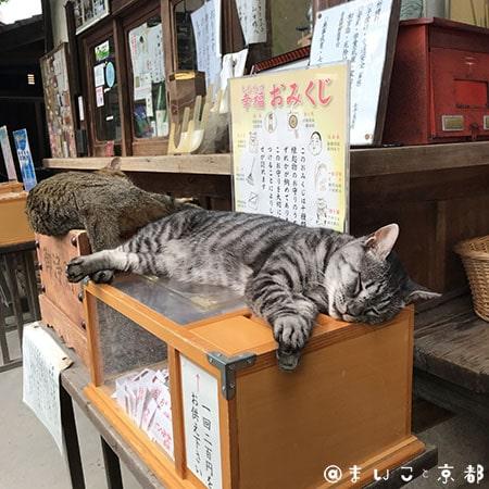 f:id:maikoto:20181206155154j:plain