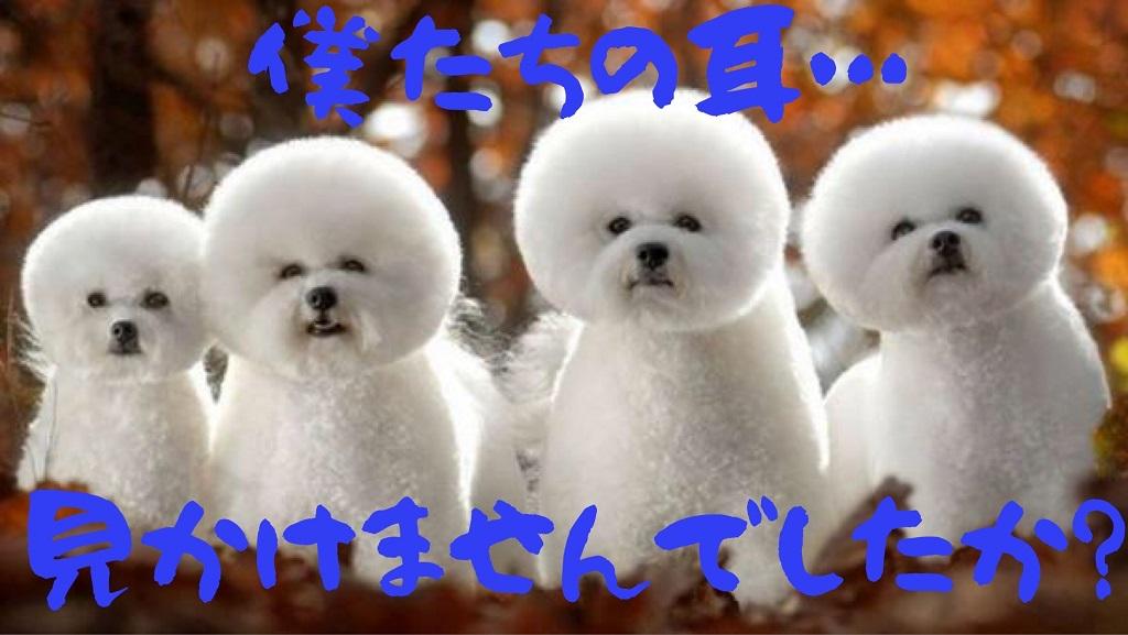 f:id:mainichi-kahchan:20200114090318j:plain