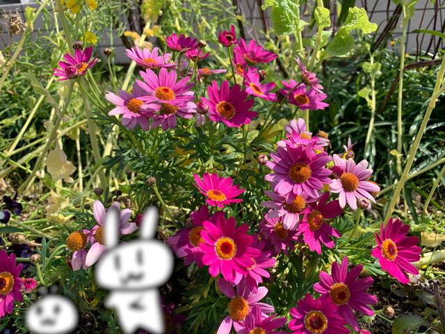 f:id:make_usagi:20200315134100j:plain