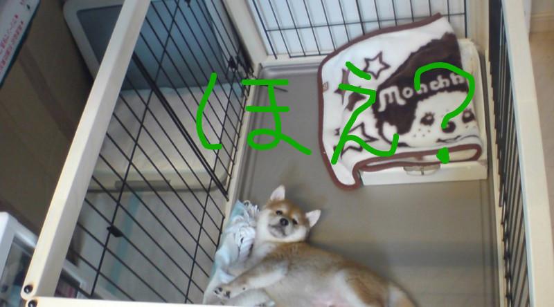 f:id:maki-mama:20081108114723j:image:w150
