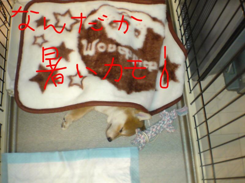 f:id:maki-mama:20081109172456j:image:w180