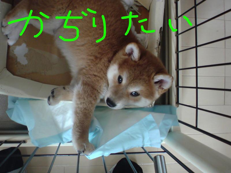 f:id:maki-mama:20081112090105j:image:w180:left