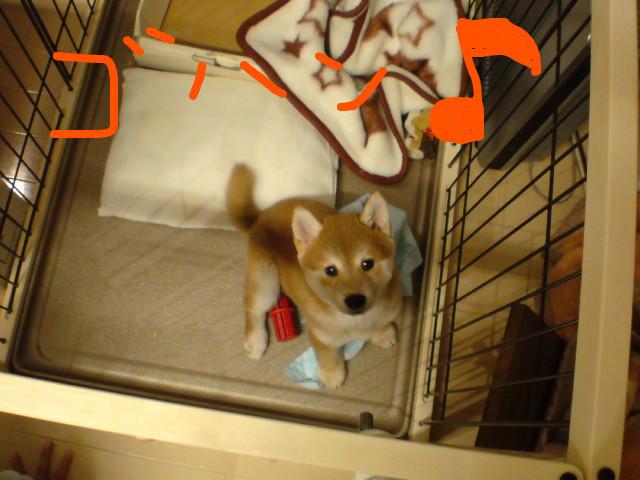 f:id:maki-mama:20081112185912j:image:w200:left