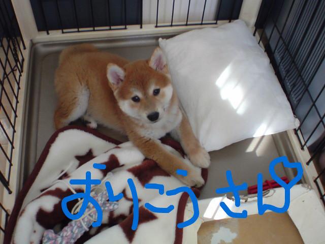 f:id:maki-mama:20081113084455j:image:w300