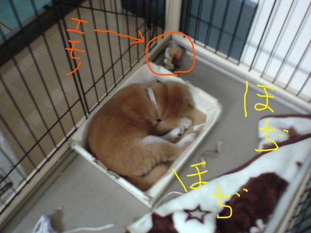 f:id:maki-mama:20081114080052j:image:left:w240
