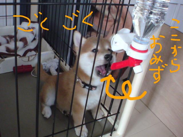 f:id:maki-mama:20081114143511j:image:w400:left
