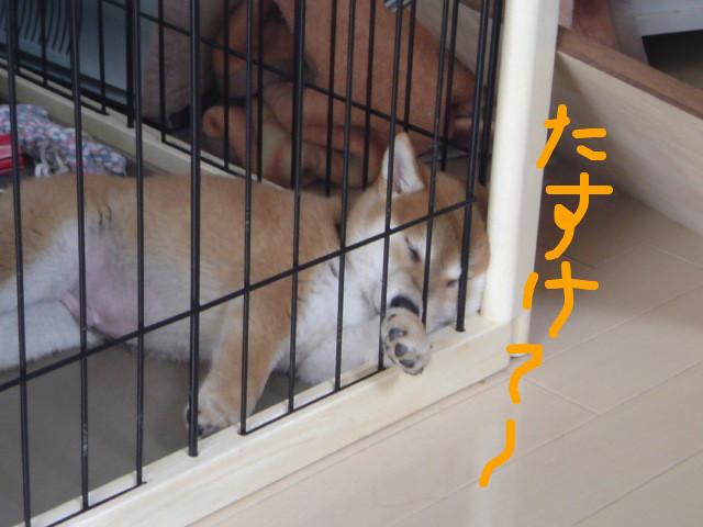 f:id:maki-mama:20081115101543j:image:w400