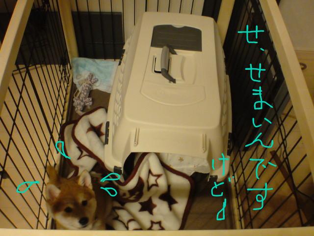 f:id:maki-mama:20081116183821j:image:w400