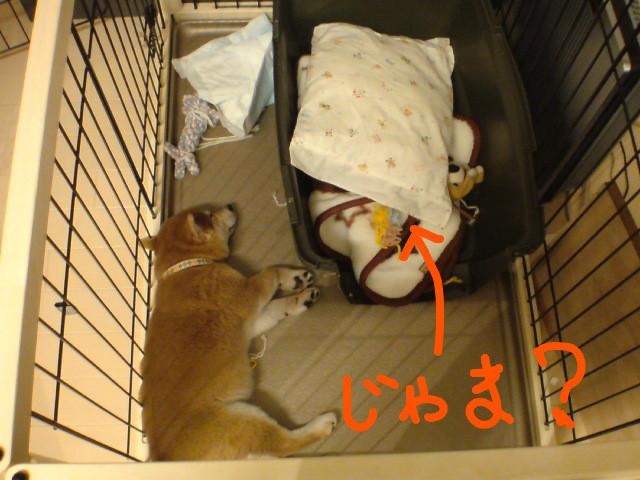 f:id:maki-mama:20081116204846j:image:w400