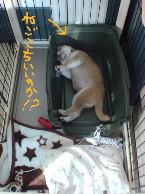 f:id:maki-mama:20081117091821j:image:w400