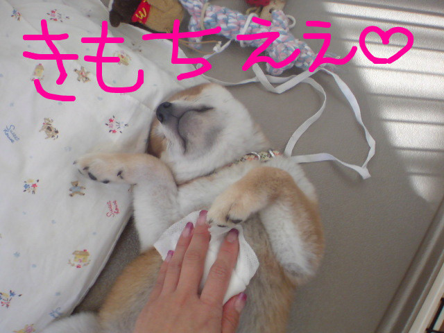 f:id:maki-mama:20081119095355j:image