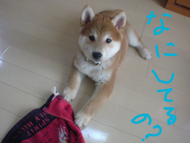 f:id:maki-mama:20081119154425j:image:w400