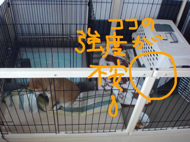 f:id:maki-mama:20081122083759j:image:w400