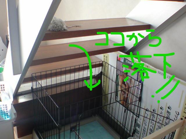 f:id:maki-mama:20081122105448j:image:w400