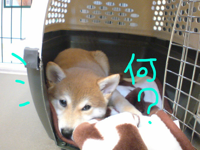 f:id:maki-mama:20081126075543j:image:w300