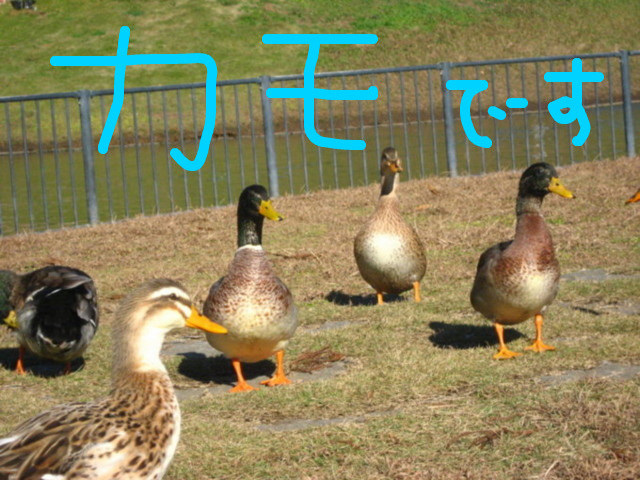 f:id:maki-mama:20081130153430j:image:w400