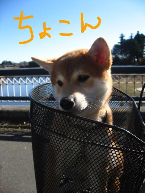 f:id:maki-mama:20081130153647j:image:w360