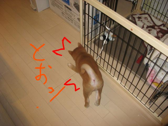 f:id:maki-mama:20081201094610j:image:w300