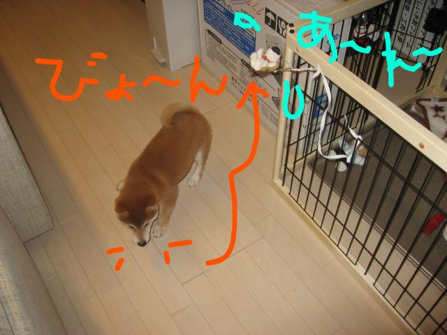 f:id:maki-mama:20081201094615j:image:w300