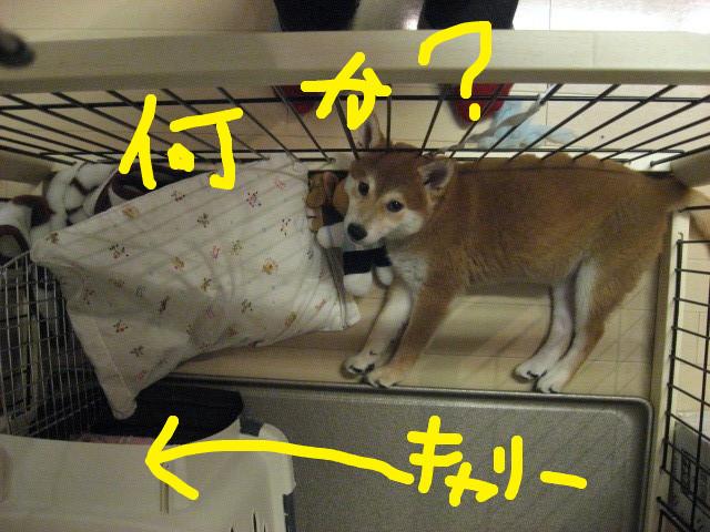 f:id:maki-mama:20081203075801j:image:w400
