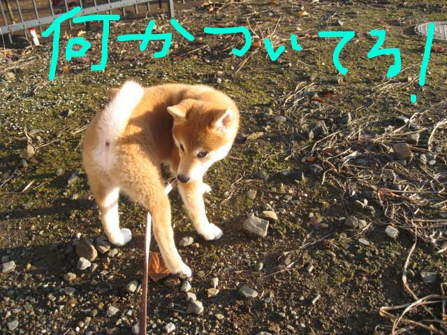 f:id:maki-mama:20081203081030j:image:w400