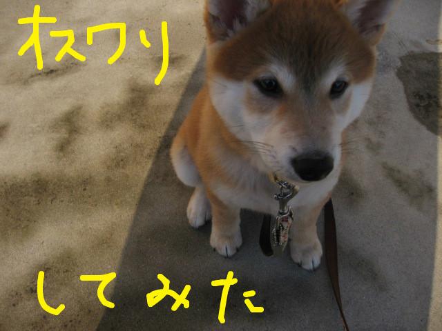 f:id:maki-mama:20081203081031j:image:w400