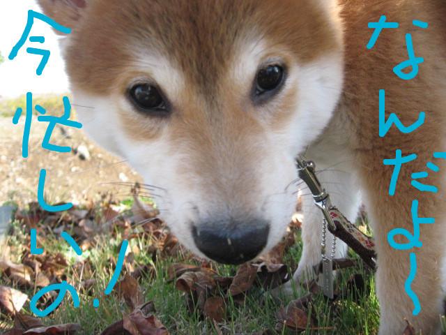 f:id:maki-mama:20081203161025j:image:w400