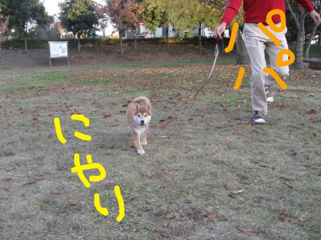f:id:maki-mama:20081203161026j:image:w400