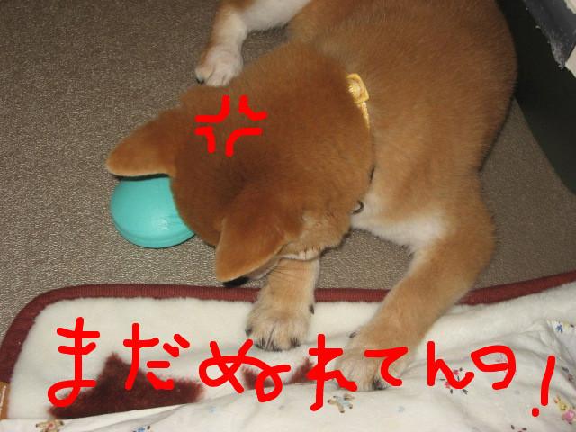 f:id:maki-mama:20081203161028j:image:w400