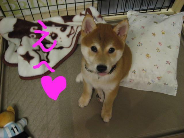 f:id:maki-mama:20081203201208j:image:w400