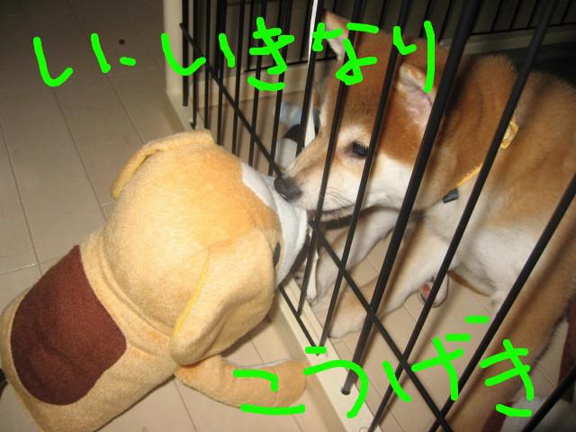 f:id:maki-mama:20081205140046j:image:w300