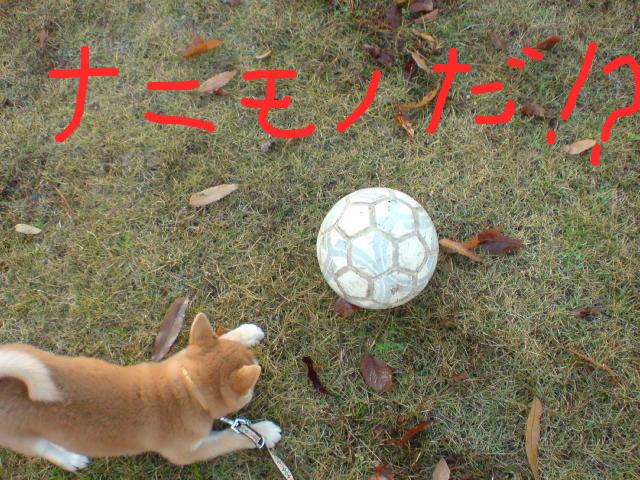 f:id:maki-mama:20081206183227j:image:w300