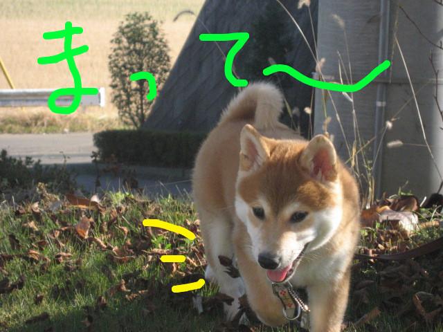 f:id:maki-mama:20081207165639j:image:w300