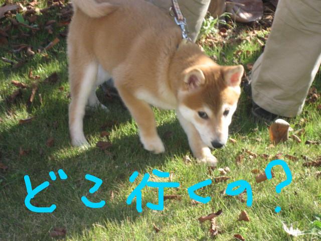 f:id:maki-mama:20081207165640j:image:w300